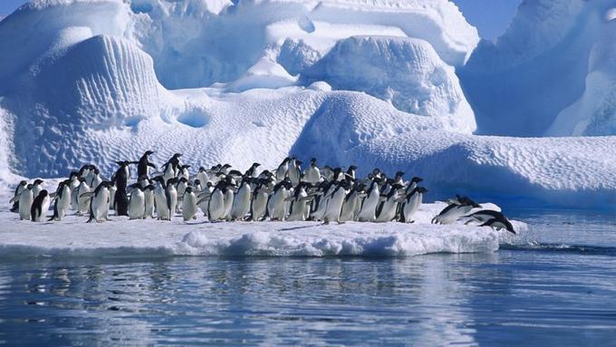 Fakta Unik Tentang Benua Antartika