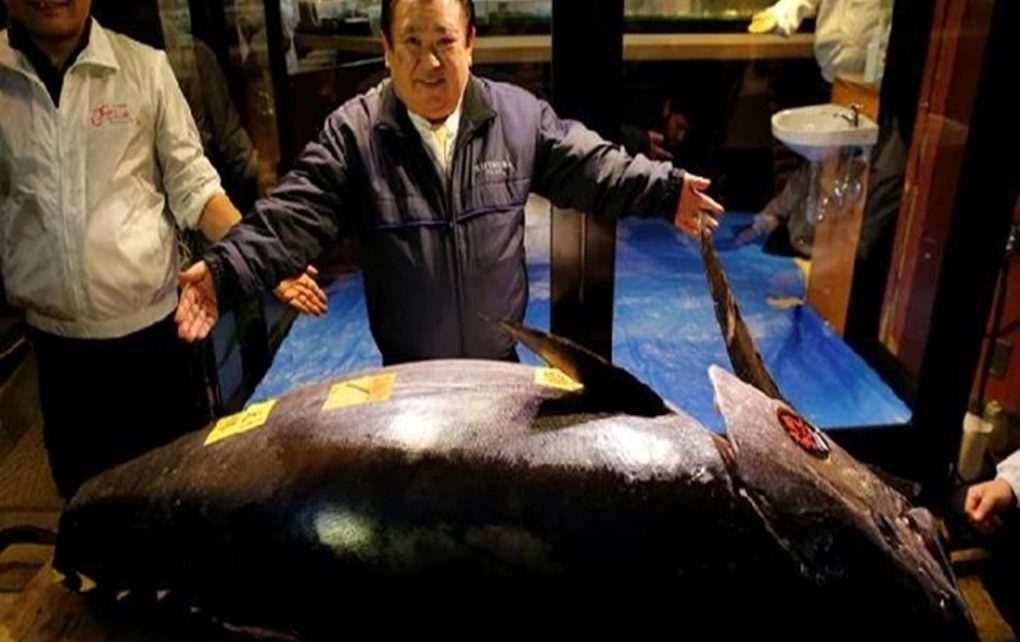 Melihat Ikan Termahal di Dunia