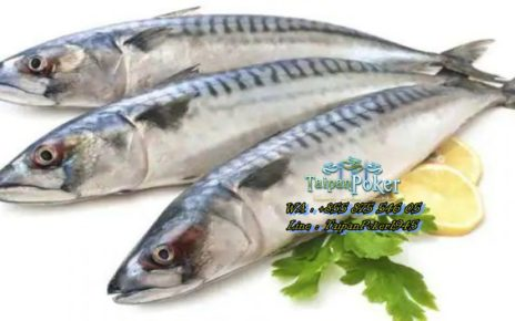 Takut Makan Ikan Karena Amis? Cek Manfaatnya