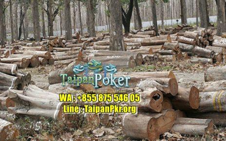 Ada Obat Kanker Dari Hutan Kalimantan ?